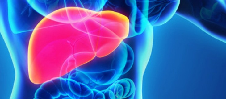 hepatologie